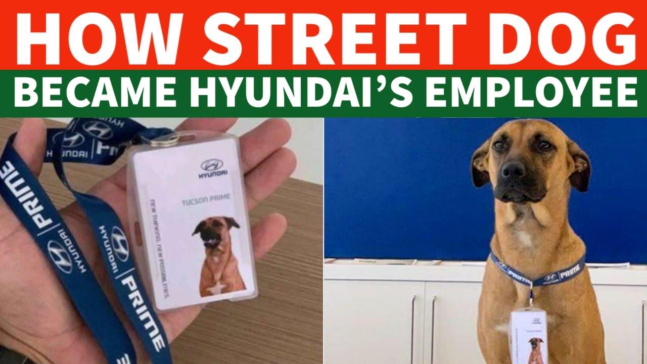 How a Street Dog Got Job In Hyundai's Showroom | Dog News In Hindi | TUC