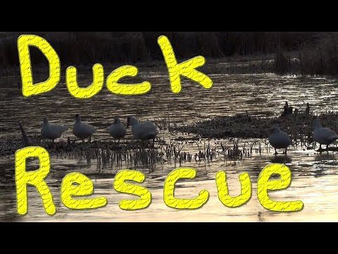 Icecovy The Duck Rescue #1 Winter Duck Adventure