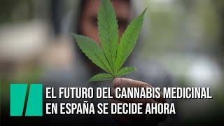 El futuro del cannabis medicinal en España se decide ahora