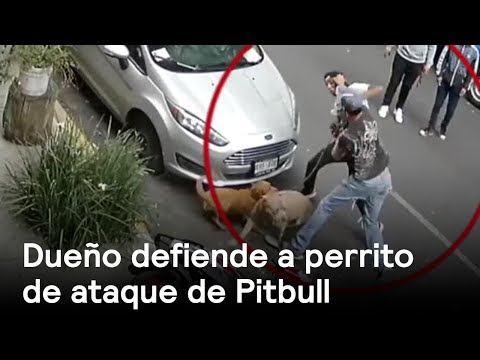 Dueño defiende a perrito de ataque de Pitbull - CDMX - En Punto con Denise Maerker