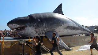 Top 6 con vật To Lớn Khổng Lồ đang tung hoành dưới biển Sâu!
