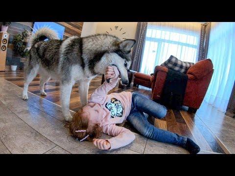 Вопрос: Как подготовить свою собаку к появлению у вас ребенка?