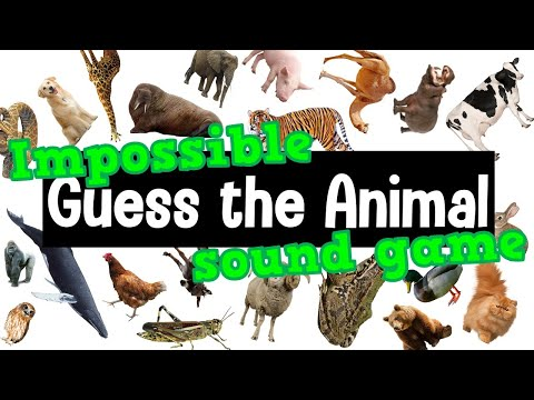Guess the Animal Sound Game   21 Difficult Animal Sounds