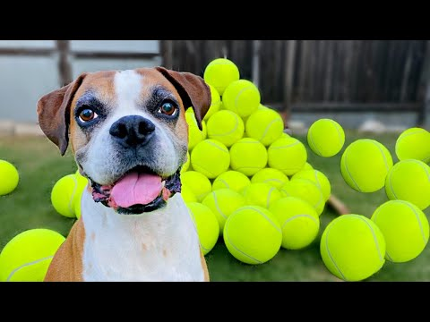 Surprising my dog with 100 GIANT Tennis Balls! ( BEST REACTION !!)