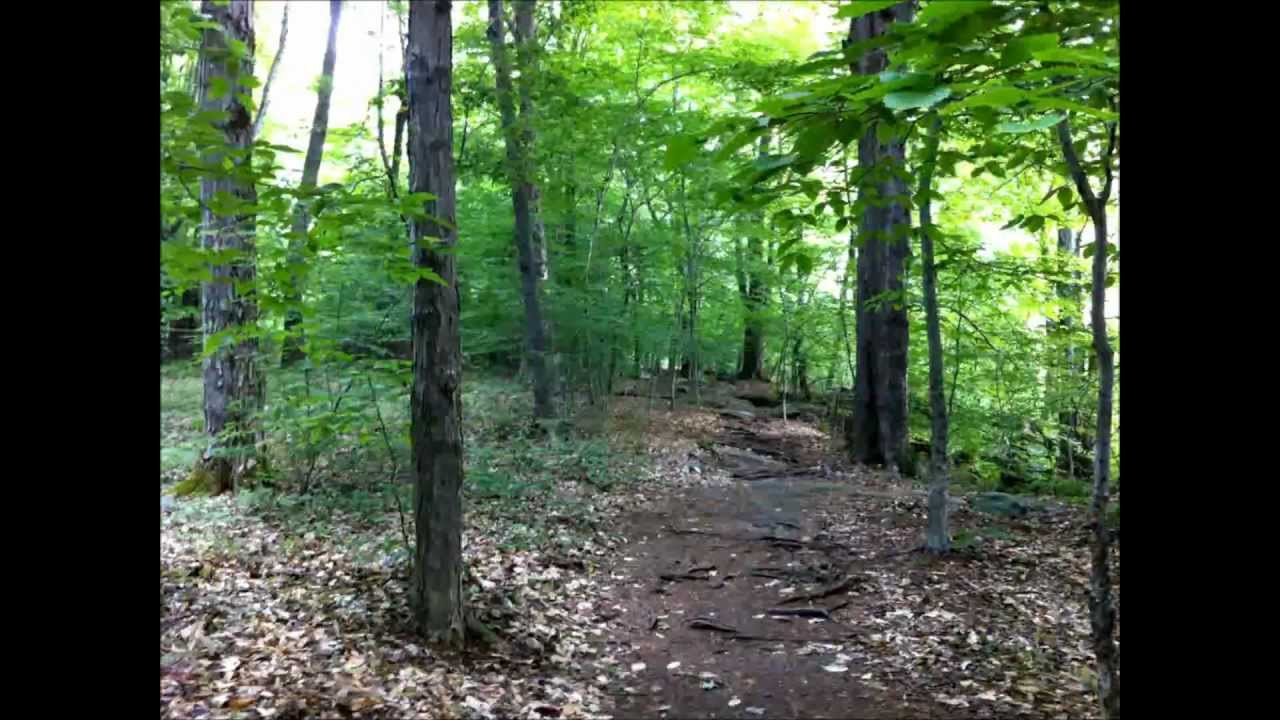 Underbrush In Owen Park Is So Dense Its >> Natural Wonders Of Upstate Ny 12 Lesser Known Marvels You Must See