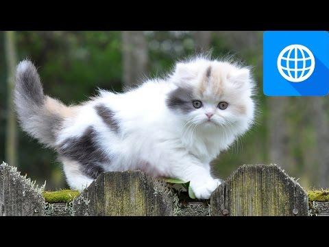 7 Smallest Cat Breeds