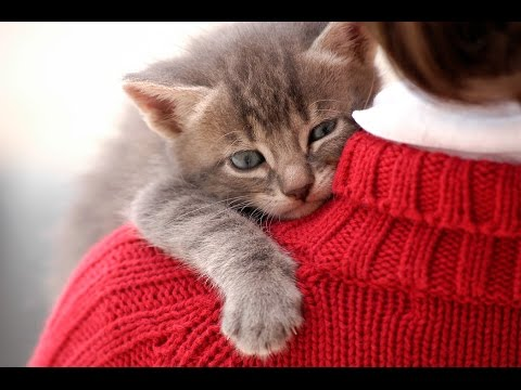 Funny Cats Jumping Into Owner's Arms Compilation || NEW HD