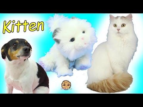 Cute Cat Little Live Pets Cuddles My Dream Kitten - Cookie Swirl C Video