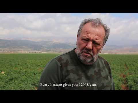 hashish bekaa-lebanon