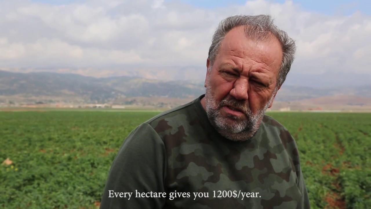 Download hashish bekaa-lebanon
