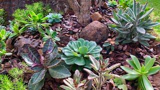Aprenda a Plantar Suculentas Direto no Chão