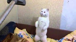 Смешные видео приколы про кошек! Битва кошки и пылесоса! Подборка№2!