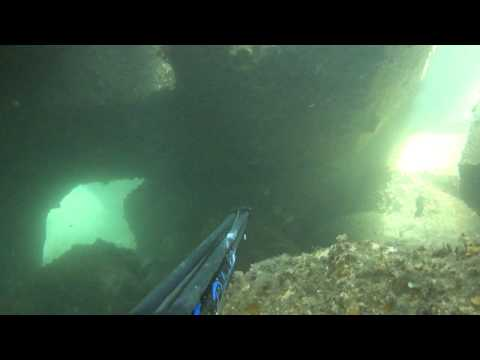Video clip of a shoal of musselcracker in Coega harbour wall, Port Elizabeth, South Africa