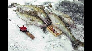 Щука зимой на Каме. Рыболовный клуб IzhFish