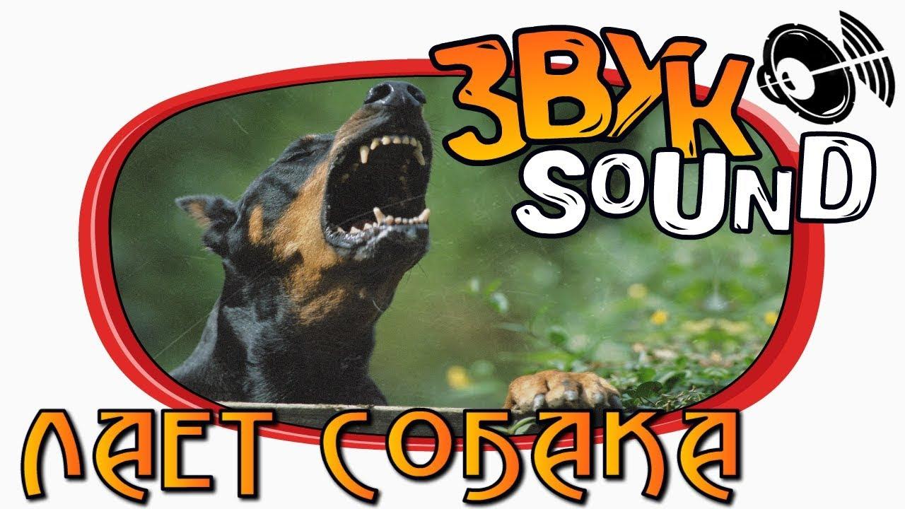 Скачать звук лай злой собаки