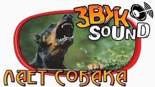 Лает собака ЗВУК / Лает собака и поют птицы / Лай собаки / Лай / DOG SOUND / DOG FX