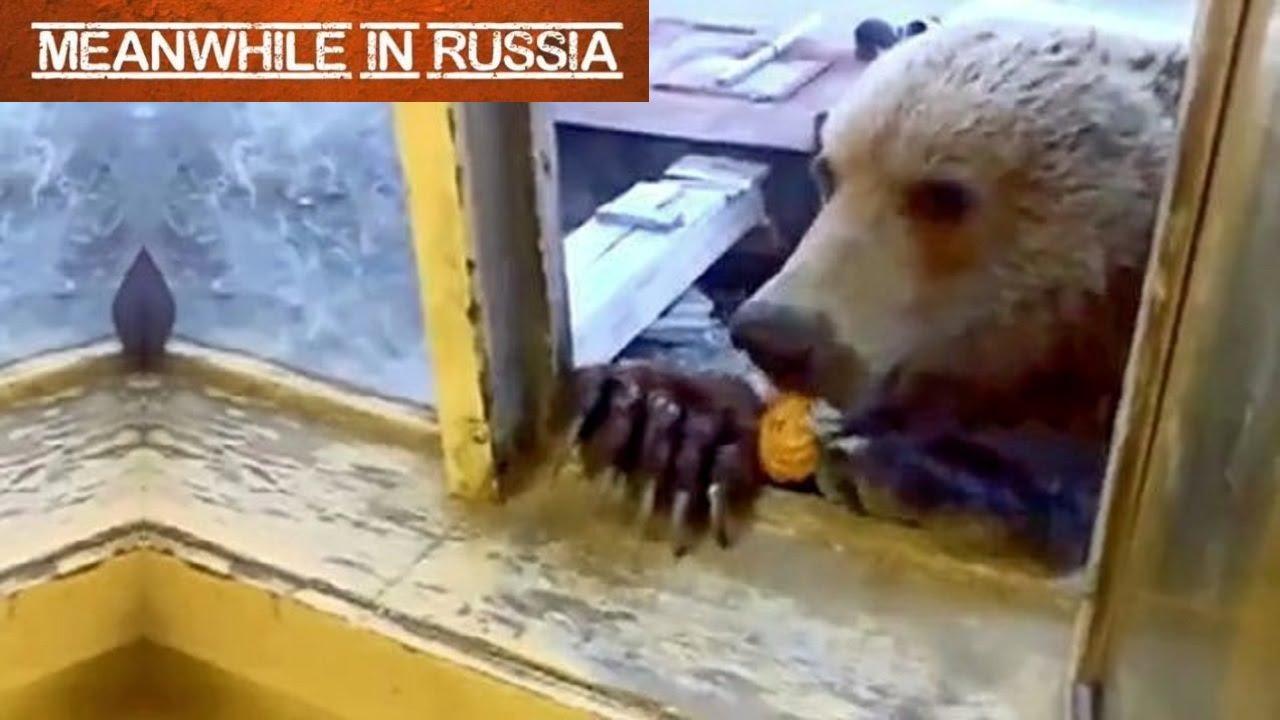 Feed Russian 56