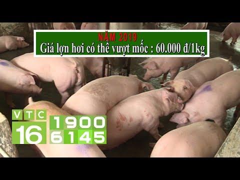 Sau dịch tả Châu Phi, giá lợn sẽ tăng kỷ lục | NTM 452 | VTC16