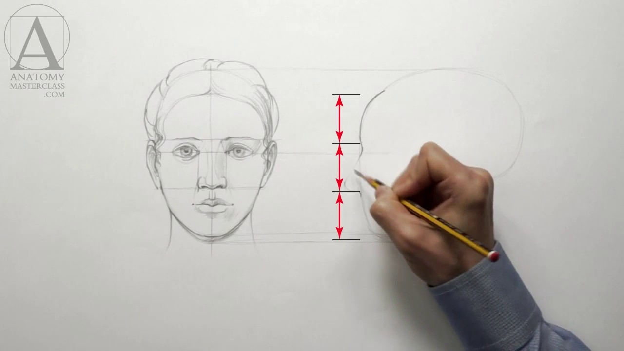 Human Head Proportions Anatomy Master Class For Figurative Artists