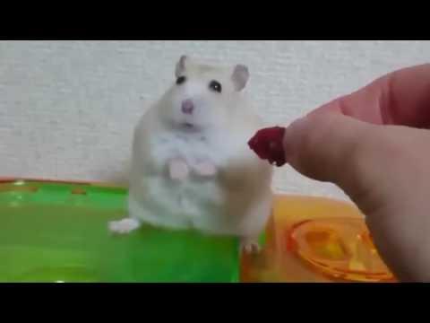 смешные фото мышки