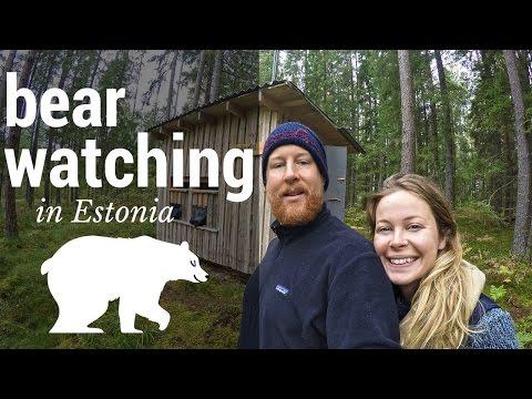 BEAR WATCHING IN ESTONIA!