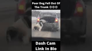 DOG FELL OUT OF A MOVING CAR T…