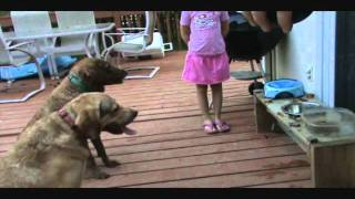 Dog Training - Food Aggression And Manners