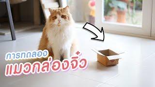 การทดลอง - แมวเข้ากล่องเล็กจิ๋วได้ไหม?