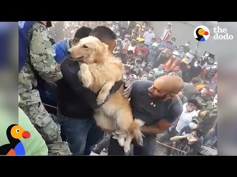 Mexico Earthquake: Dog Pulled From The Rubble | The Dodo