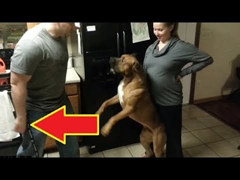 Thumbnail: 5 Dogs PROTECTING Their Owners Caught On Camera