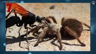10 Największych owadów świata!