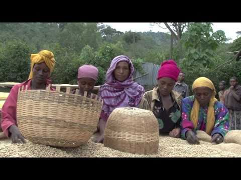 ETHIOPIA - COUNTRY OF THE OLDEST COFFEE CULTURE ON EARTH