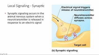 BCOR011WL Chpt 11 Cell Signaling