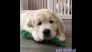 かわいい動物たち おもしろペット動画#13