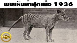 10 สัตว์โลกสูญพันธุ์และเสี่ยงใกล้สูญพันธุ์จากฝีมือมนุษย์