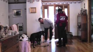 Kyle, Lab, Episode 23 (fear Aggression - 2nd Stranger Success) - Sit Up N Listen Dog Training