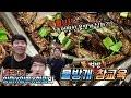 태국 in 파타야 ) 과연...한국인 3명이서 이렇게 큰 벌레를 먹을수 있을까?? (약혐주위)