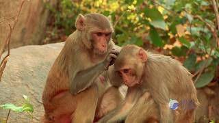 HADGARH Wildlife Sanctuary