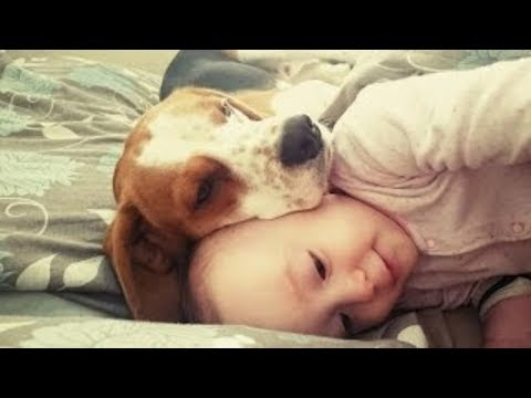 Dog and baby are best friends: It's never too late to train your pet to get along with your children
