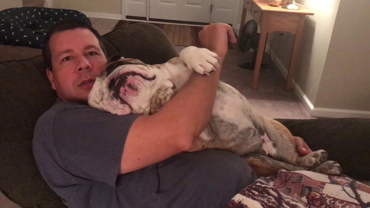 reuben-the-bulldog-the-evening-routine