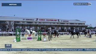 Разведение лошадей «Корабаир» в Фергане
