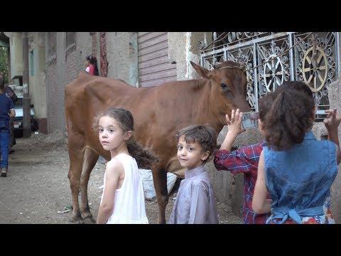أول مرة يشوفوا العيد في مصر | VLOG 119