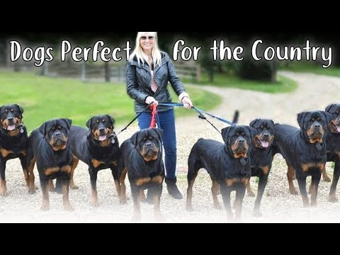 10 Dog Breeds Perfect for the Country