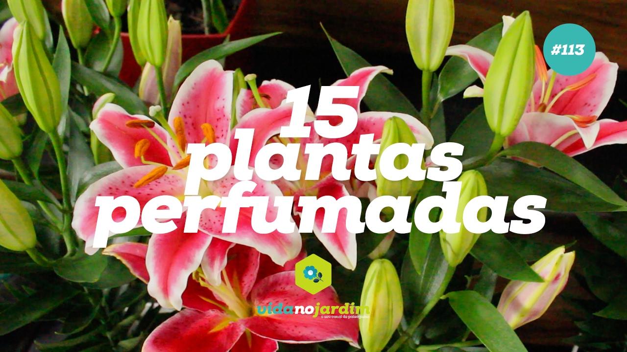 15 plantas perfumadas para jardim 113 youtube for Plantas para estanques de peces