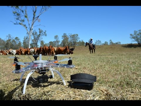 Remote Controlled Cattle Mustering Takes Flight