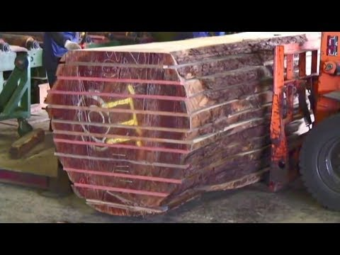 Japanese Fastest Biggest Wood Sawmill Machine Work || Amazing Inside Large Tree Processing Factory