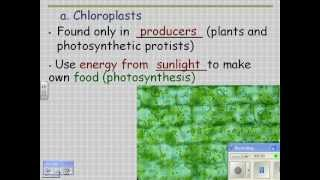 2012 HN Cell Structure 11 chloroplasts and plastids