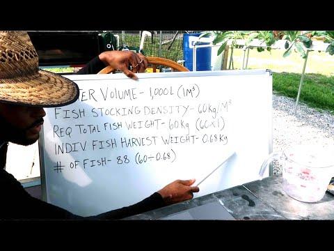 HOW MANY FISH IN 1000 L (264 GAL) TANK | AQUAPONICS