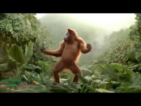 Funny Ape Song. Cartoon Parody. Dance Music Pop Songs. (Dancing Gorilla) Kids Cartoons movies 2015