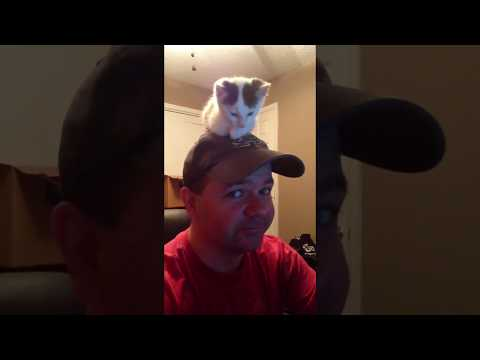 hunkeren Foxworth Jaimee Porn video